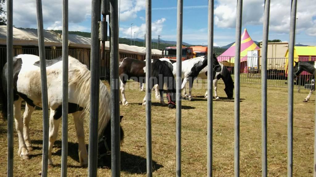 circo lidia togni sopralluogo animalisti