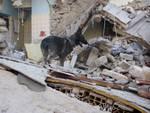 cani su macerie terremoto amatrice