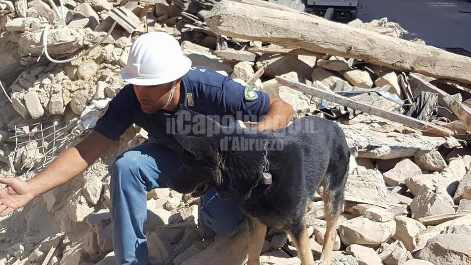 Leo, cane eroe che ha salvato Giorgia
