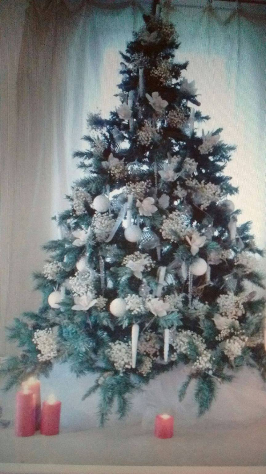 Gli alberi di Natale dei lettori de Il Capoluogo - Il Capoluogo