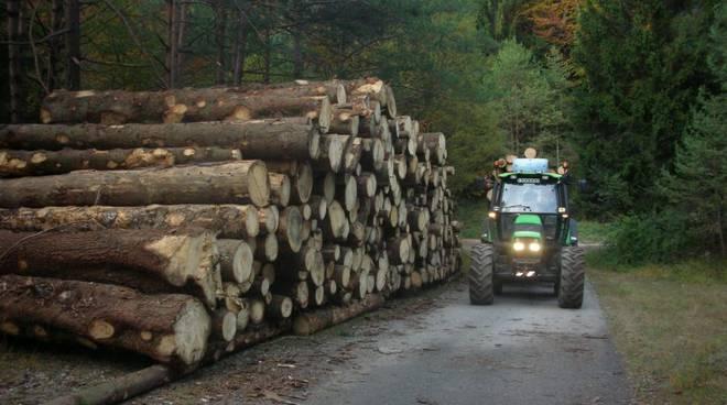 lavori boschivi