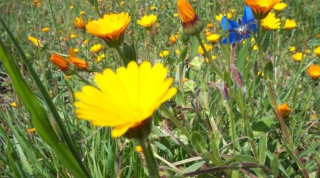 fiori, prato, primavera