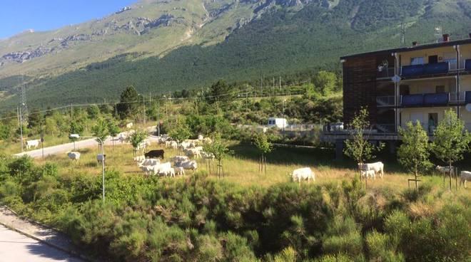 mucche progetto case assergi