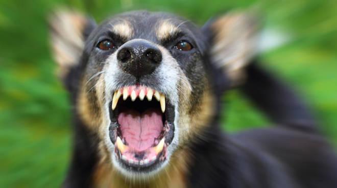 cane arrabbiatao