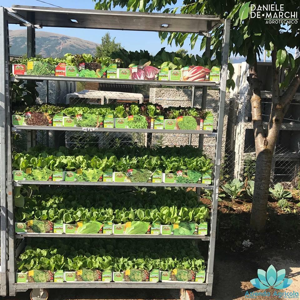 Coltivare l\'orto, anche sul balcone - Il Capoluogo