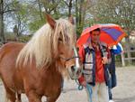 masterclass agility draft horses barete