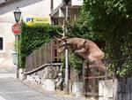 cervo che salta la coda foto di angelina Iannarelli