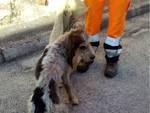 cane trasacco