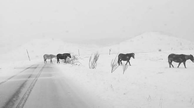 Cavalli tra la neve di campo imperatore