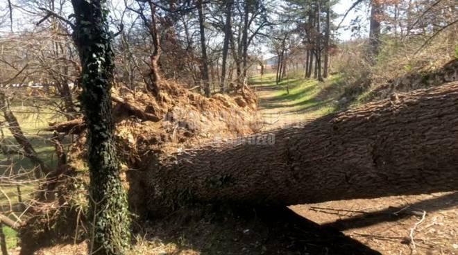 murata gigotti alberi