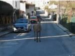 cervo civitella alfedena