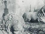 due leoni preturo