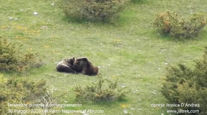 coccole orsi parco nazionale