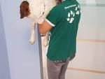 Ugo il beagle