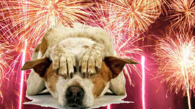 Fuochi d'artificio, una tradizione da abbandonare
