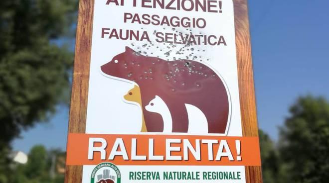 cartello anti investimento fauna selvatica