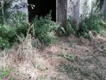 monteluco, pineta abbandonata
