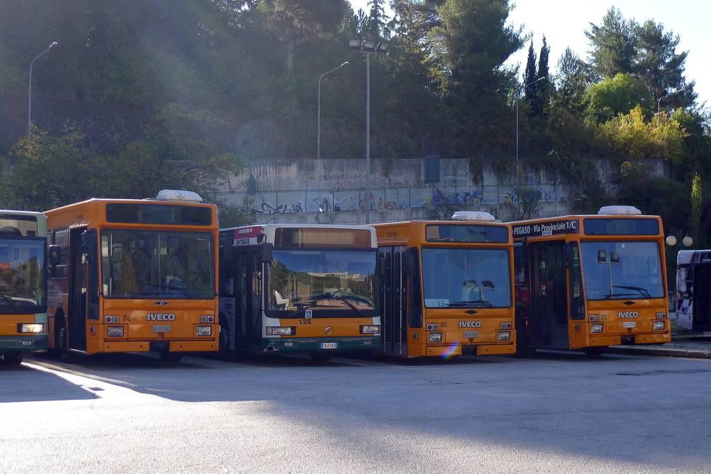 autobus ama
