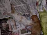 gattini spazzatura