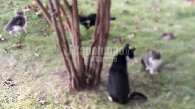 gatti gignano