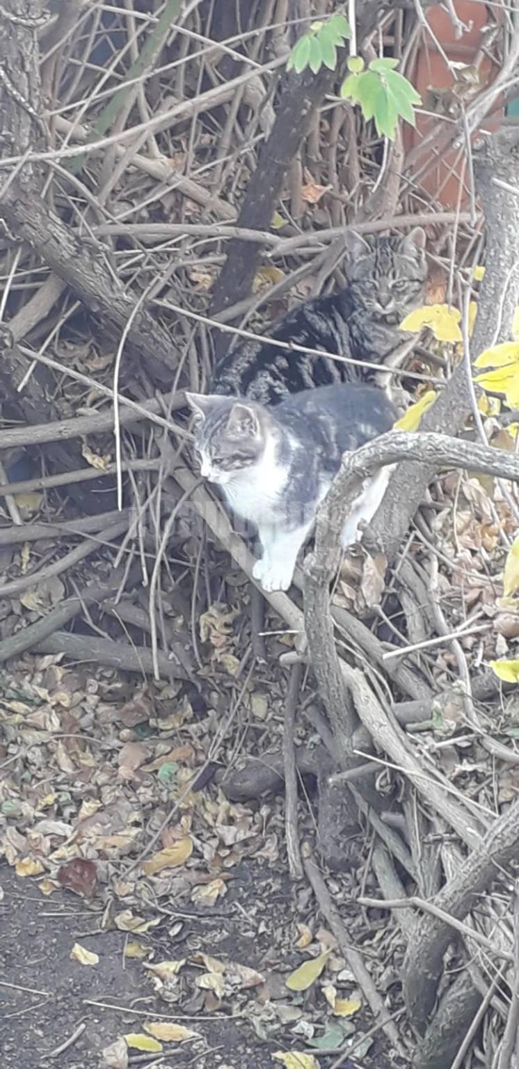 Giardino Di Una Casa gatti abbandonati nel giardino di una casa a gignano - il