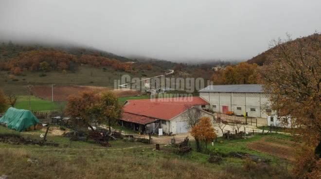 capannone Goriano pastore morto