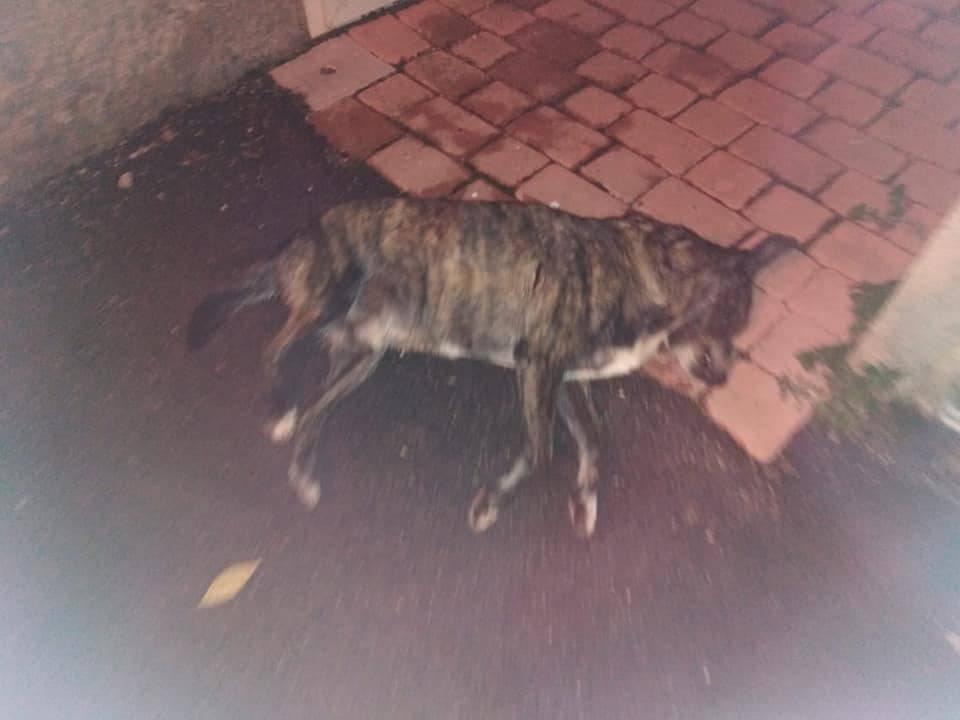 cane ammazzato tornimparte