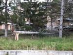 albero spezzato