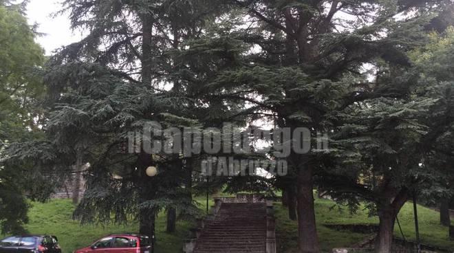 alberi Piazzale Paoli