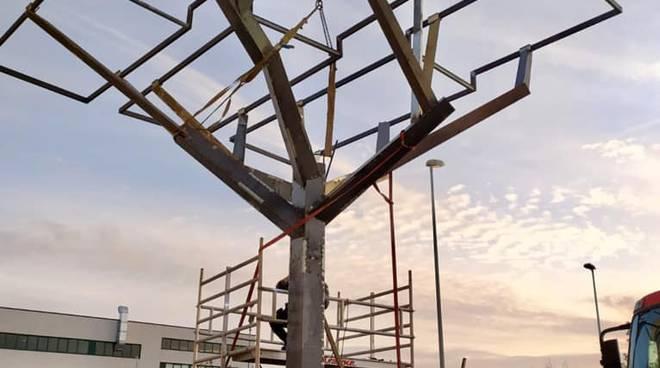 alberi nuovi piazza del mercato