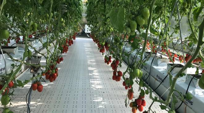 Ferrari Farm idroponica
