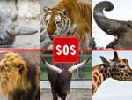 SOS Zoo Coronavirus