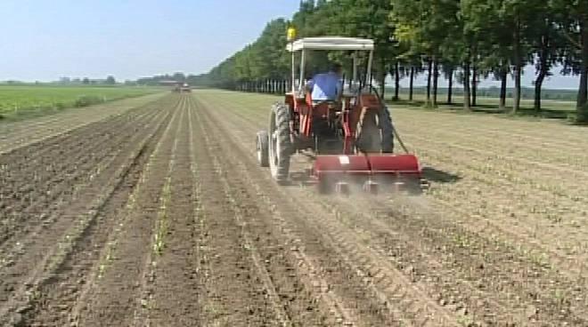 lavori agricoli fucino