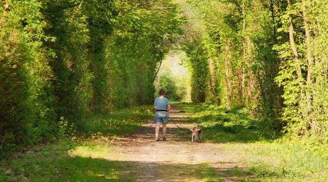 passeggiata campagna cane