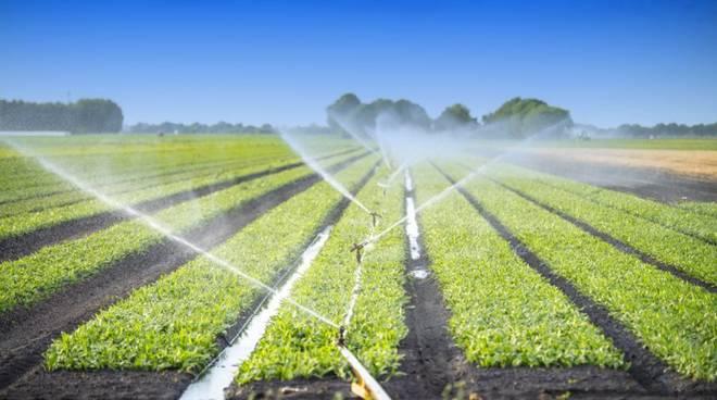 irrigazione fucino