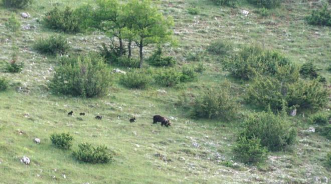 parco orsa orso cuccioli