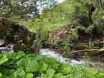 crollo ponte su fiume giovenco