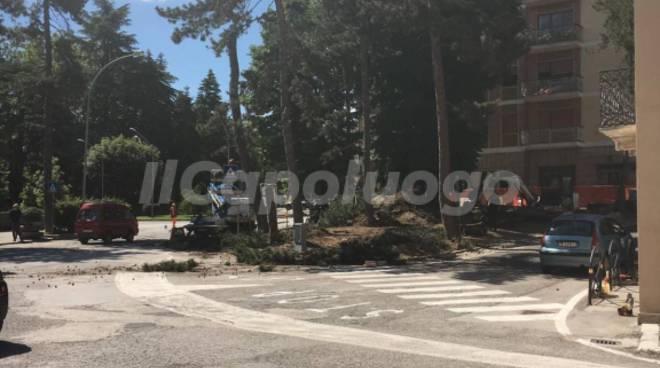 piazza della genca alberi tagliati
