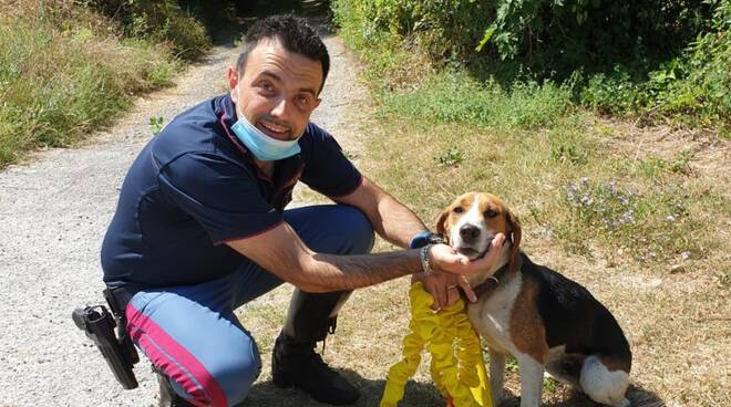 cucciolo di beagle salvato da polizia