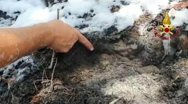 incendio l'aquila sottobosco vvff