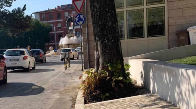 piazza della genca albero