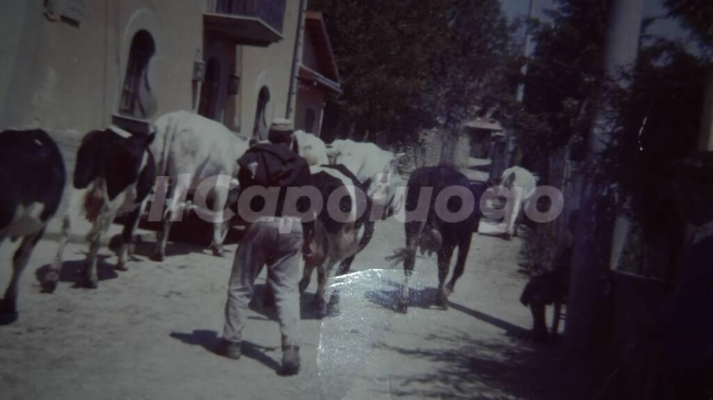 Azienda agricola irene moriconi