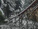 albero neve parco castello