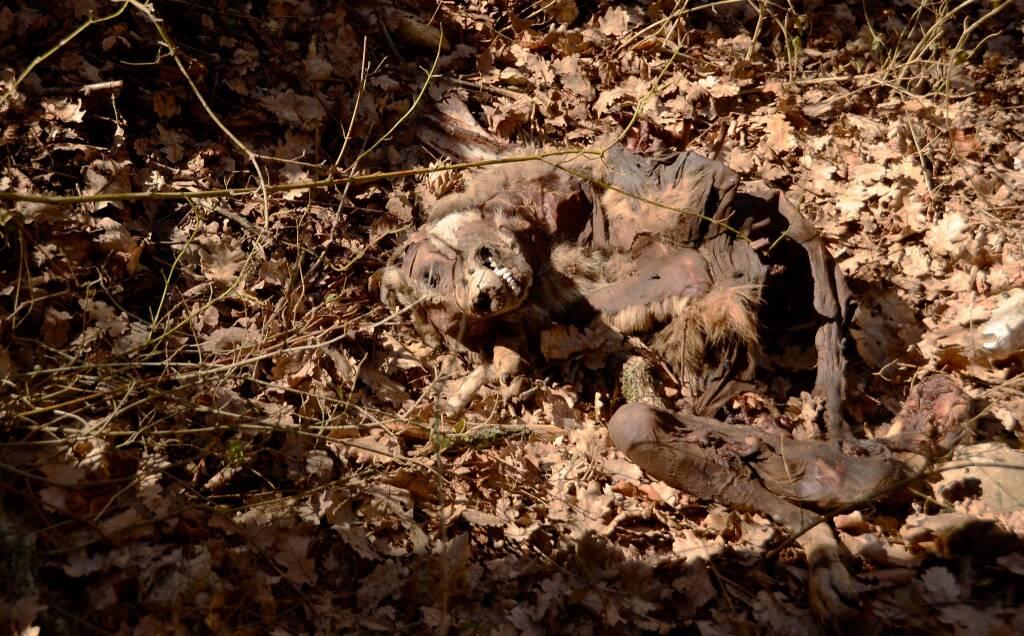 orsa e animali avvelenati