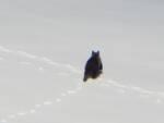 orso marsicano riserva velino