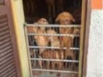 allevamento cani meticci