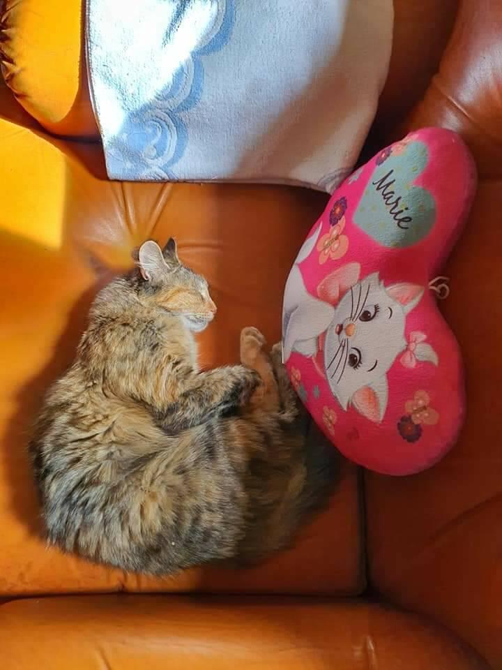 gattina niru