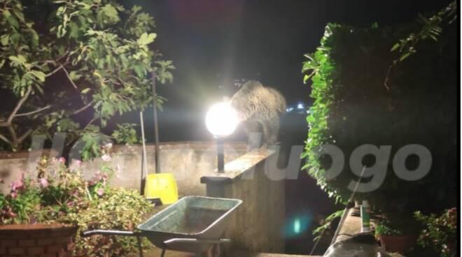 orso in giardino Civita d'Antino