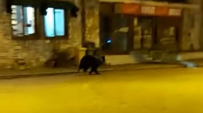 orso roccaraso